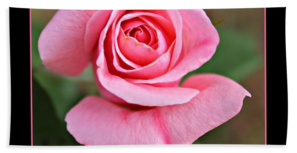 Roses Hand Towel featuring the photograph Love Roses by Clare Bevan