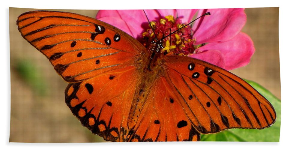 Butterfly Bath Sheet featuring the photograph Lovely Lady by Karen Beasley