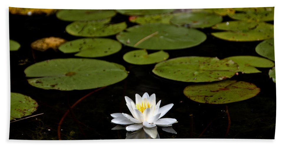 Hand Towel featuring the photograph Lovely Pond Lily by Cheryl Baxter