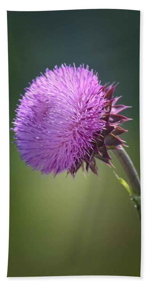 Loving Lavender Bath Sheet featuring the photograph Loving Lavender by Maria Urso