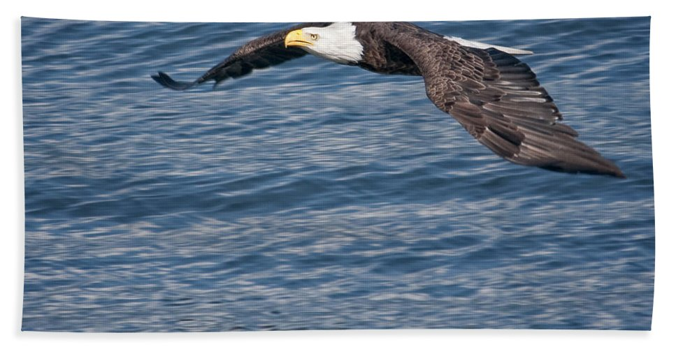 Eagles Hand Towel featuring the photograph Low Flying by Claudia Kuhn