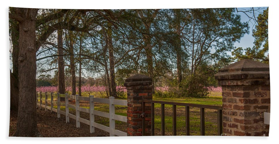 Boone Hall Plantation Bath Sheet featuring the photograph Lowcountry Gates To Boone Hall Plantation by Dale Powell