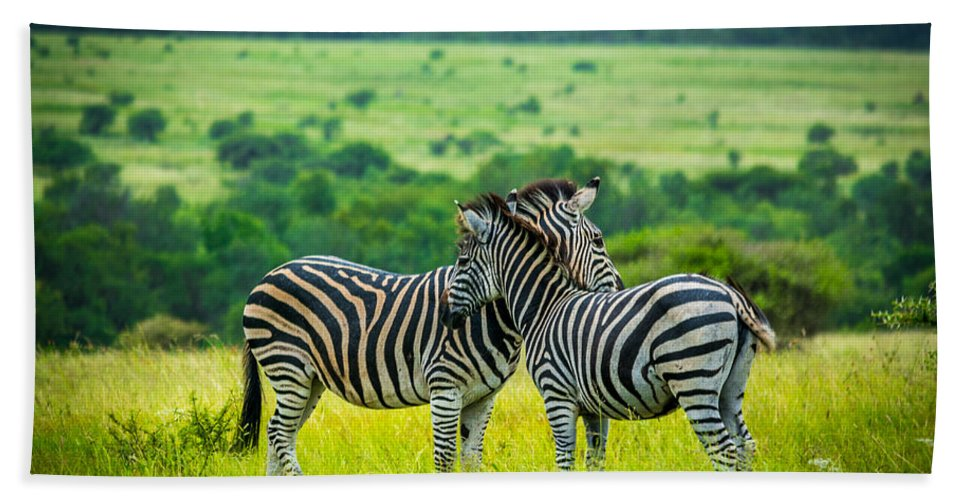 Zebra Hand Towel featuring the photograph Loyalty by Andrew Matwijec