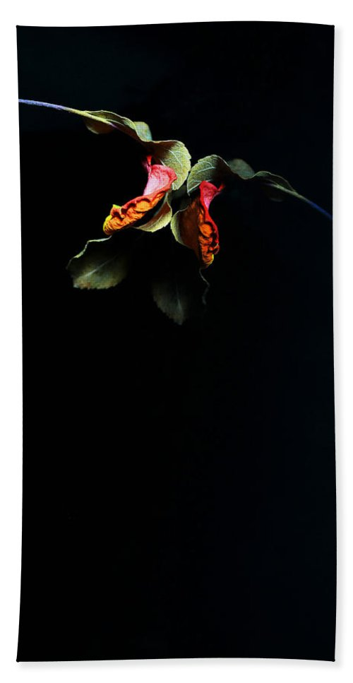 Rose Hand Towel featuring the photograph Lr 103 by Dawn Marshall