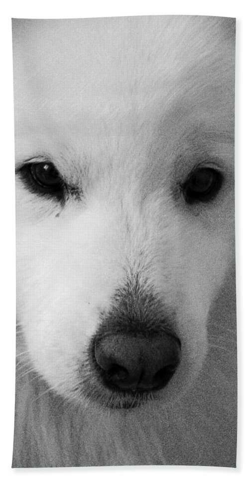Dog Bath Sheet featuring the digital art Lucy Textured Pencil by David Lange