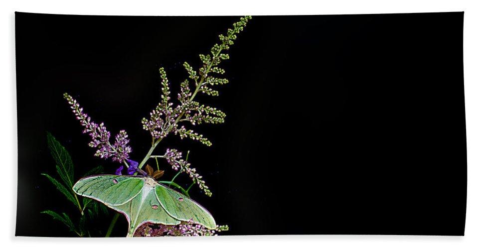 Luna Moth Bath Sheet featuring the photograph Luna Moth Astilby Black Background by Randall Branham