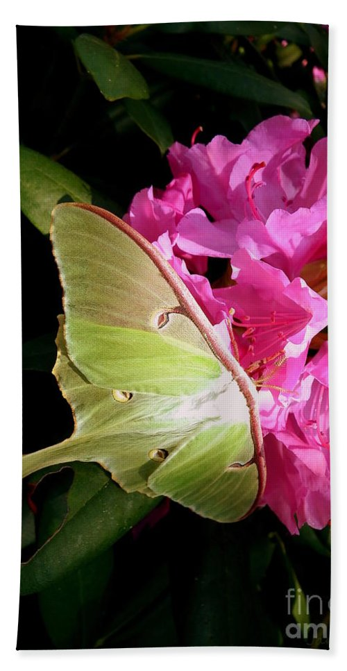 Moth Hand Towel featuring the photograph Luna Moth by Janine Riley