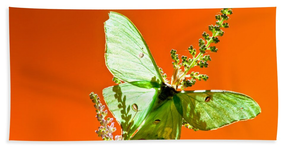 Luna Moth Bath Sheet featuring the photograph Luna Moth On Astilby Orange Back Ground by Randall Branham