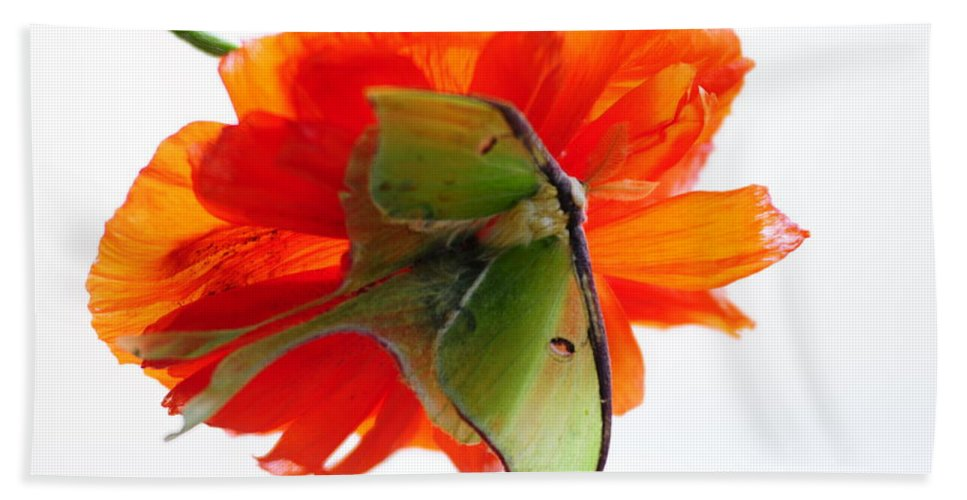 Luna Moth Bath Sheet featuring the photograph Luna Moth Poppy High Key by Randall Branham