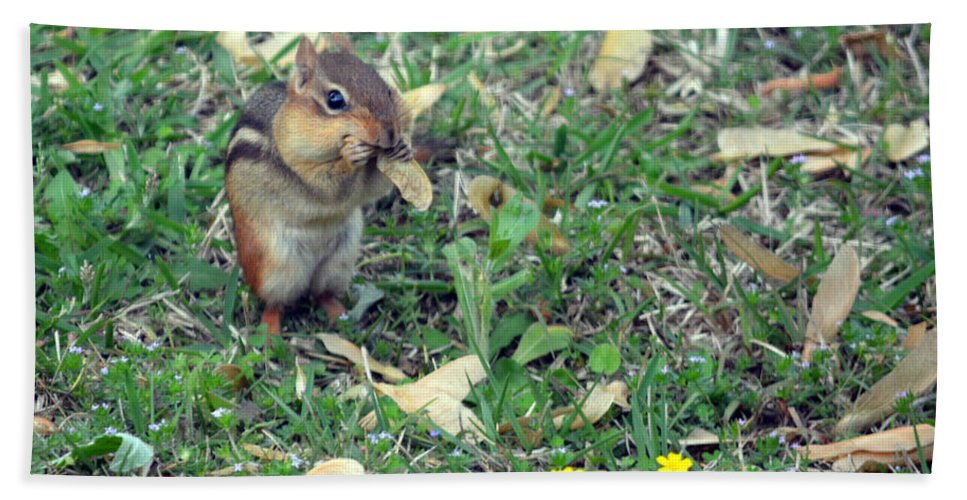 Chipmunk Hand Towel featuring the photograph Lunch Time Photo B by Barb Dalton