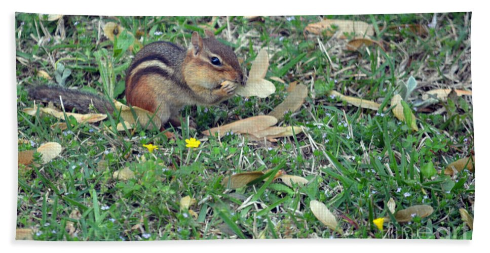 Chipmunk Hand Towel featuring the photograph Lunch Time Photo E by Barb Dalton
