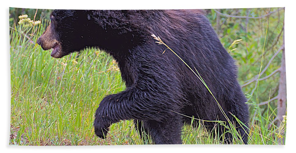 Lunging Black Bear Cub Near Road In Grand Teton National Park Hand Towel featuring the photograph Lunging Black Bear Near Road In Grand Teton National Park-wyoming  by Ruth Hager