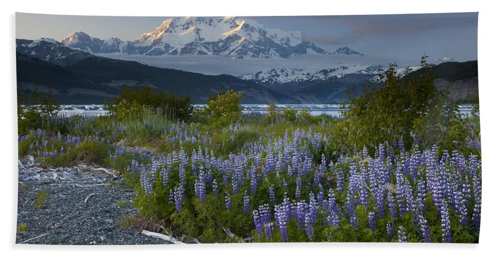 00477994 Hand Towel featuring the photograph Lupine And Mount Elias by Matthias Breiter