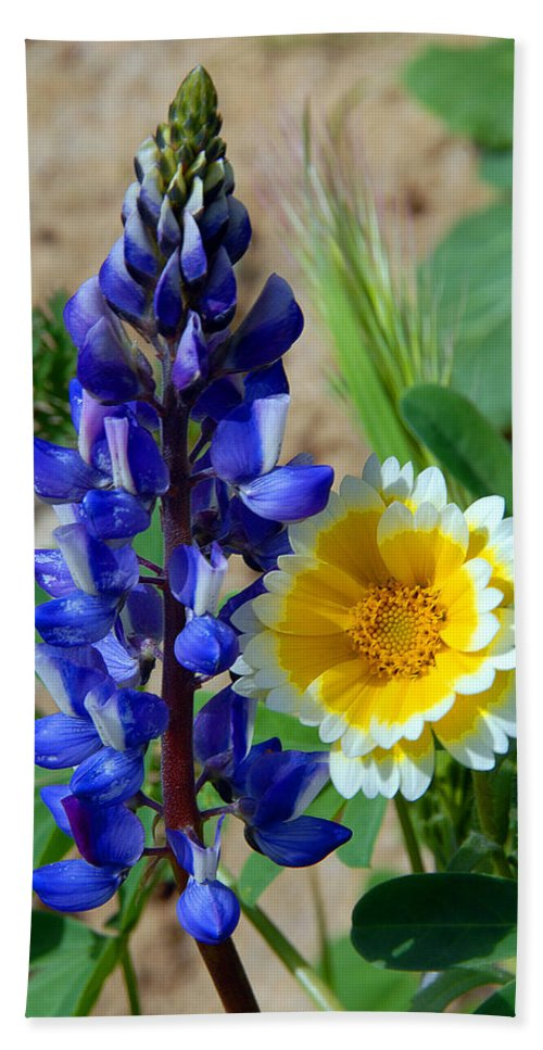 Lupine Bath Sheet featuring the photograph Lupine And Tidy Tip by Lynn Bauer