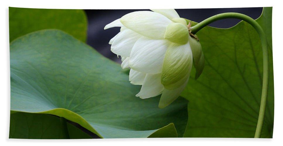 Macro Bath Sheet featuring the photograph Luscious Lotus by Sabrina L Ryan
