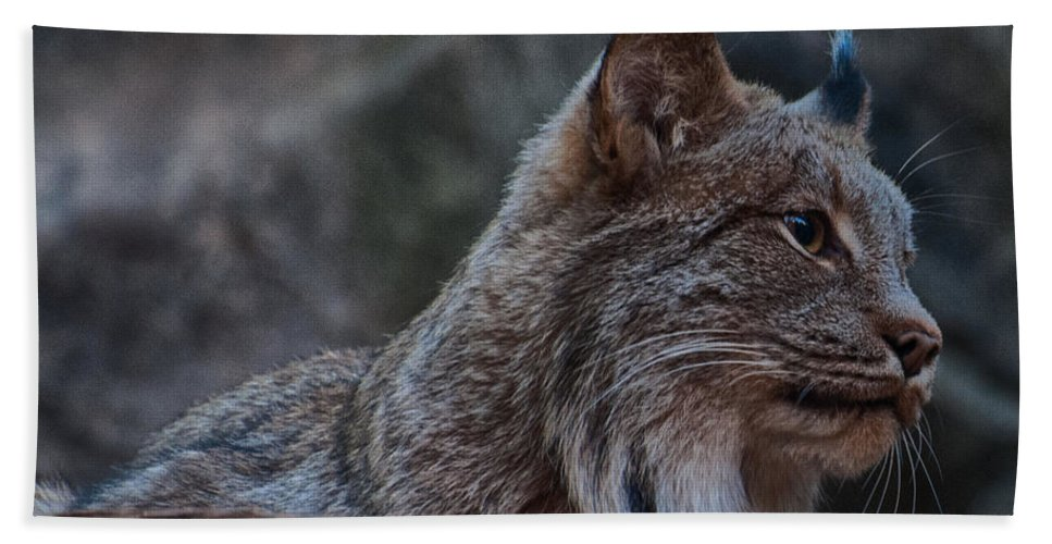 Lynx Hand Towel featuring the photograph Lynx by Bianca Nadeau