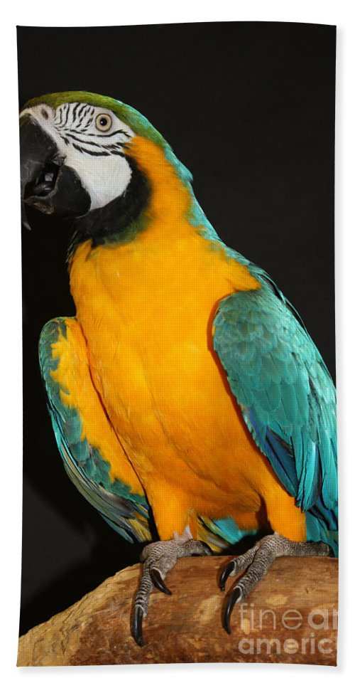 Macaw Hanging Out Bath Sheet featuring the photograph Macaw Hanging Out by John Telfer