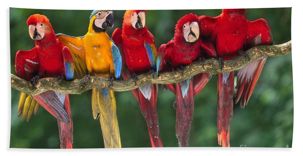 Bizarre Bath Sheet featuring the photograph Macaws by Frans Lanting MINT Images