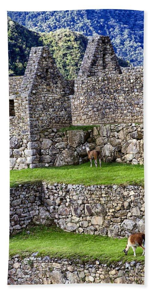 Macchu Picchu Bath Sheet featuring the photograph Machu Picchu - Grazing Lamas by Jon Berghoff