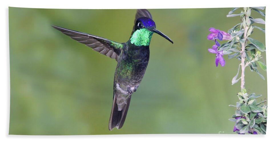 Fauna Hand Towel featuring the photograph Magnificant Hummingbird by Anthony Mercieca