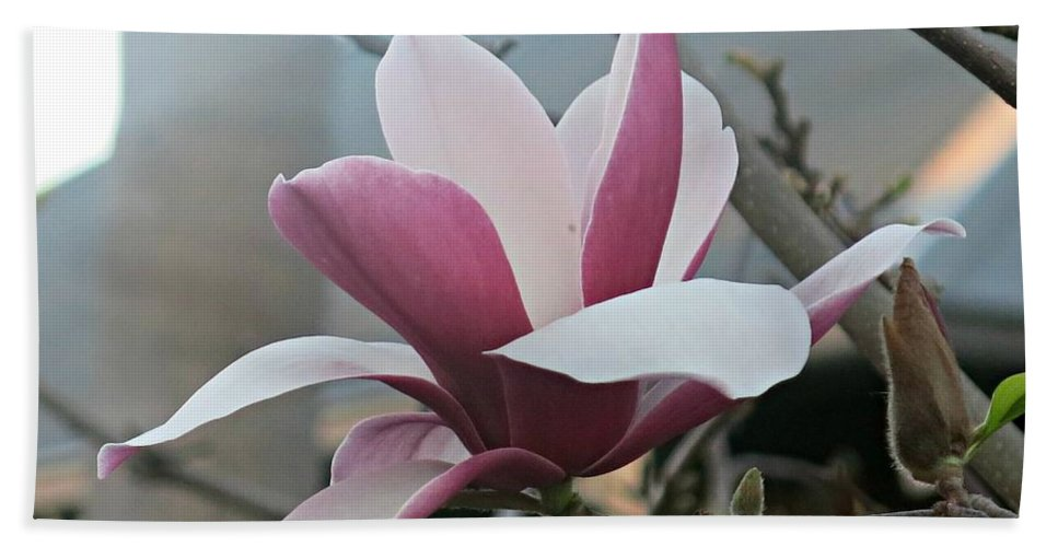 Magnolia Bath Sheet featuring the photograph Magnificent Magnolia Blossom by Leanne Seymour