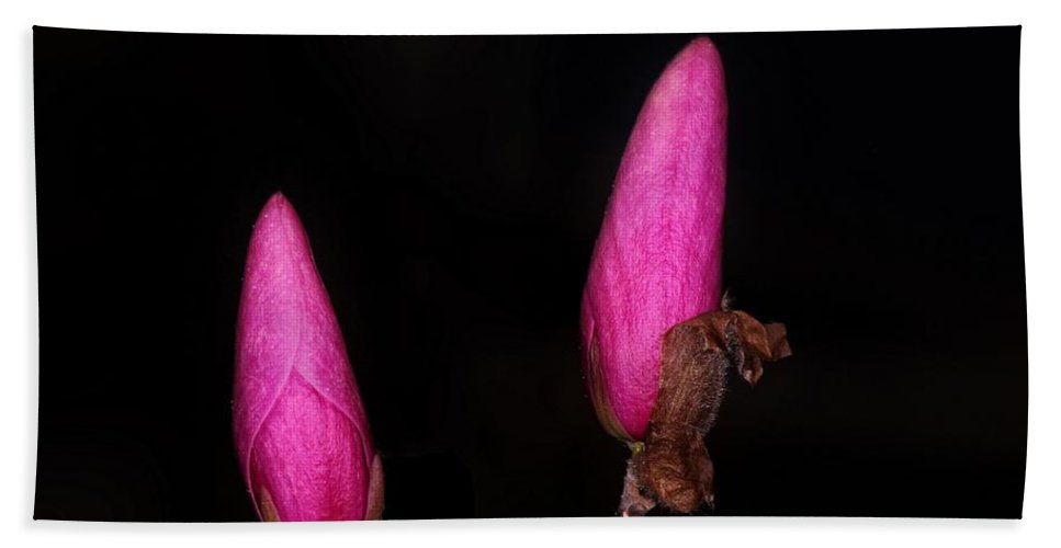 Magnolia Bath Sheet featuring the photograph Magnolia After Dark by Michael J Samuels