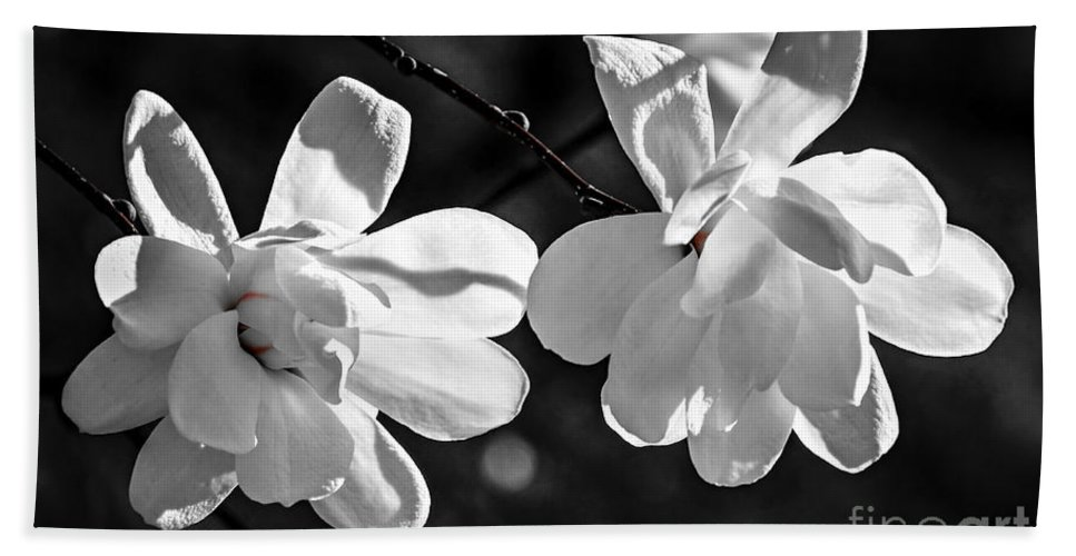 Magnolia Hand Towel featuring the photograph Magnolia Flowers by Elena Elisseeva
