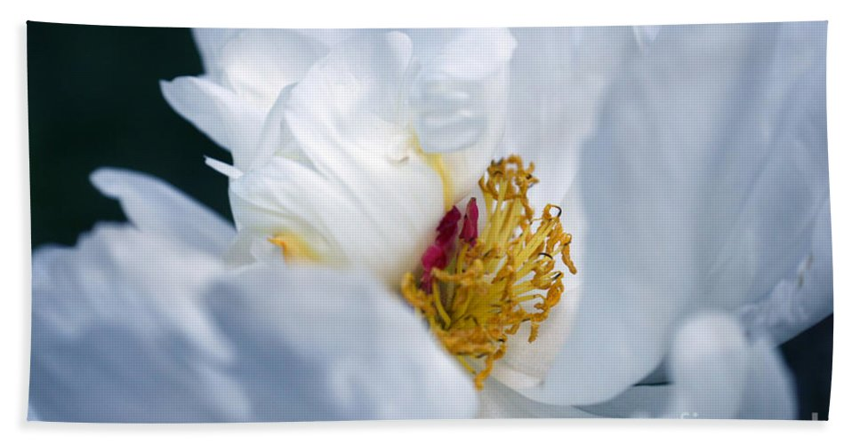 Magnolia Hand Towel featuring the photograph Magnolia by Lali Kacharava