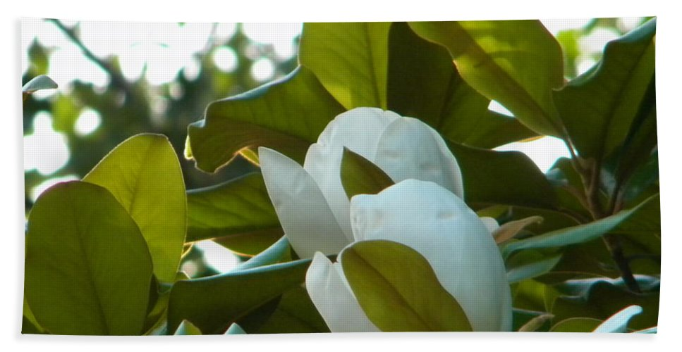 Magnolia Hand Towel featuring the photograph Magnolia Pair by Nathanael Smith