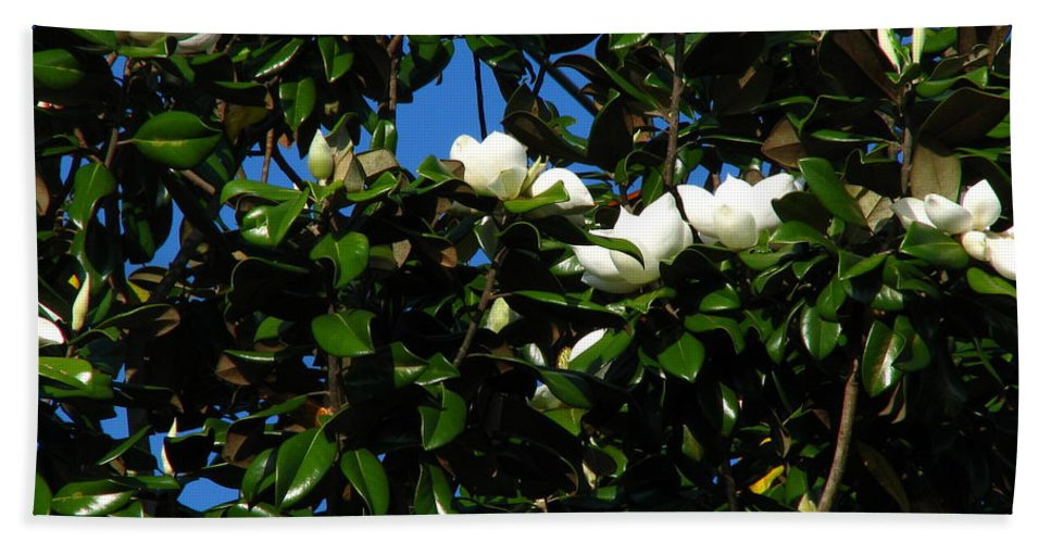 Patzer Hand Towel featuring the photograph Magnolia Setting by Greg Patzer