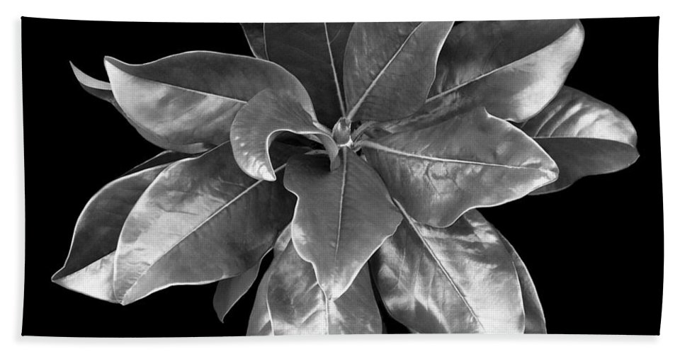 Magnolia Bath Towel featuring the photograph Magnolia Tree Leaves by Marilyn Hunt