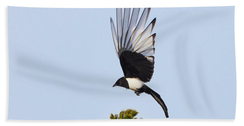 Common Magpie Hand Towel featuring the photograph Magpie Dreams by Jouko Lehto