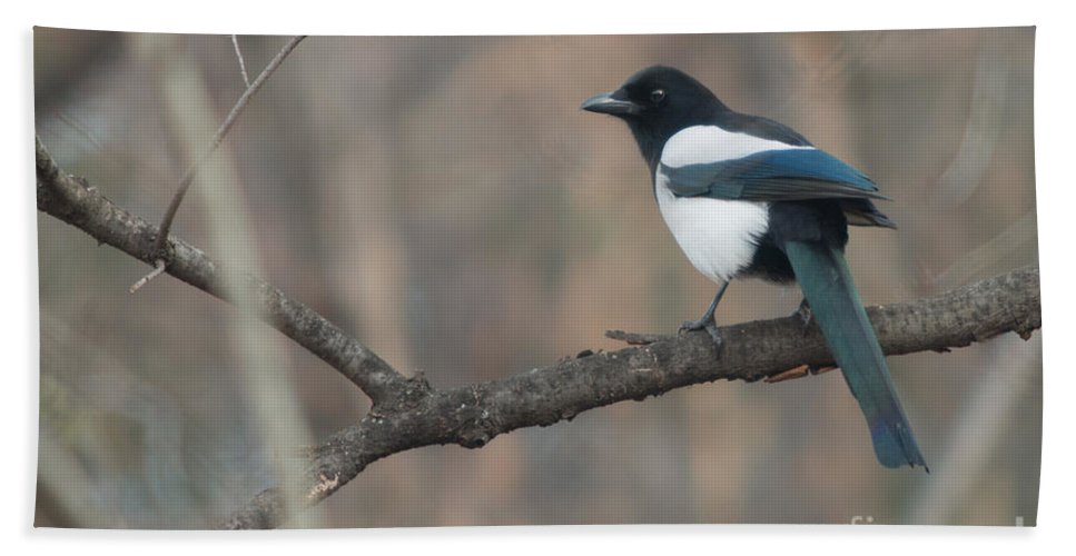 Birds Hand Towel featuring the photograph Magpie by Jivko Nakev