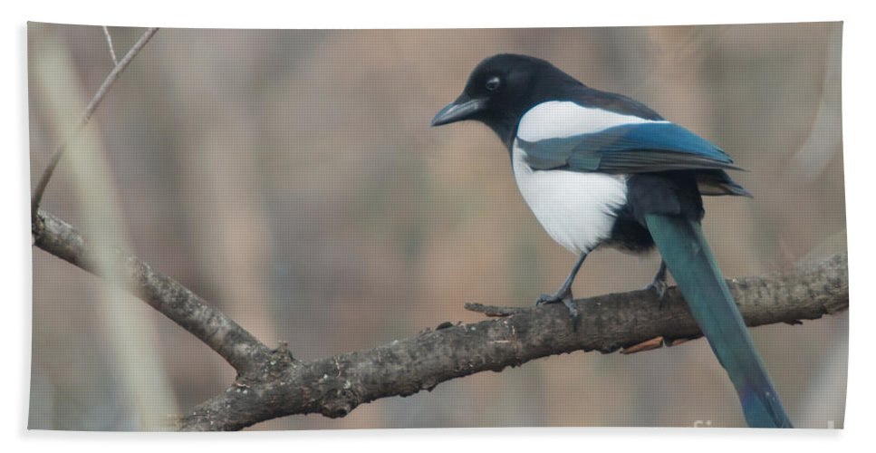 Birds Hand Towel featuring the photograph Magpie Perched On Twig by Jivko Nakev
