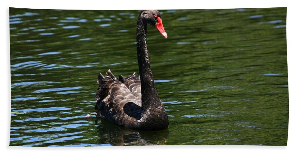 Swan Hand Towel featuring the photograph Majestic Black Swan by Darren Burton
