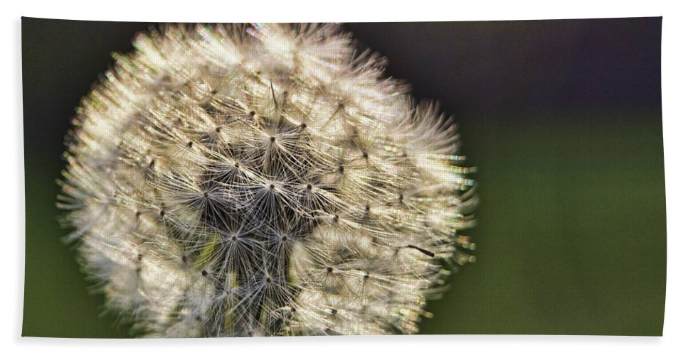 Dandelion Hand Towel featuring the photograph Make A Wish by Cricket Hackmann