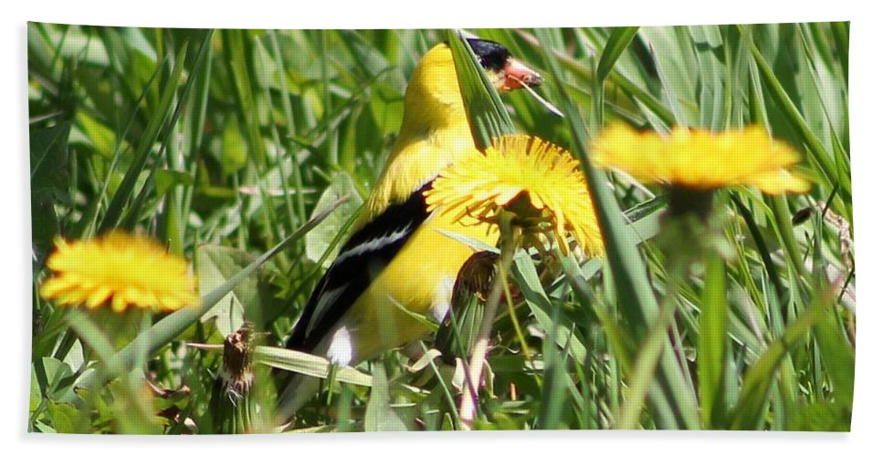 American Goldfinch Hand Towel featuring the photograph Male American Goldfinch Camouflage by J McCombie