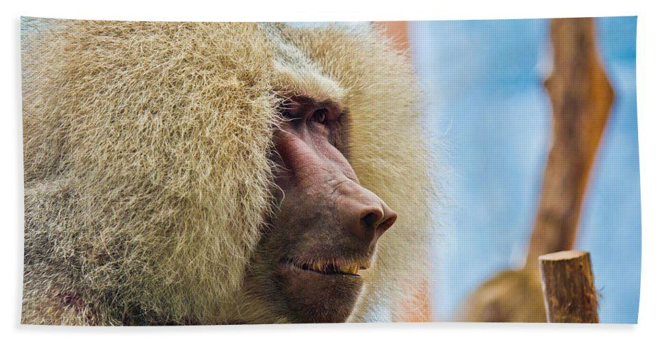 Close Bath Sheet featuring the photograph Male Baboon by Jonny D