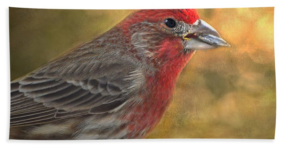 Nature Hand Towel featuring the photograph Male Finch With Seed by Debbie Portwood