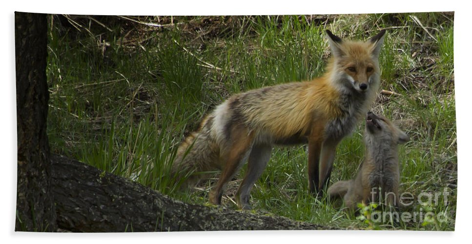 Fox Bath Sheet featuring the photograph Male Fox And Pup  #3554 by J L Woody Wooden