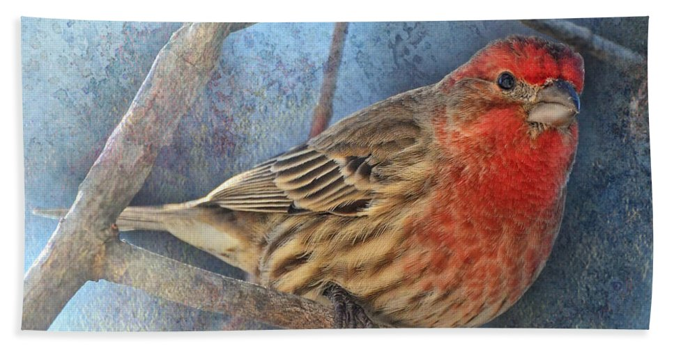 Animals Bath Sheet featuring the photograph Male Housefinch Close View by Debbie Portwood
