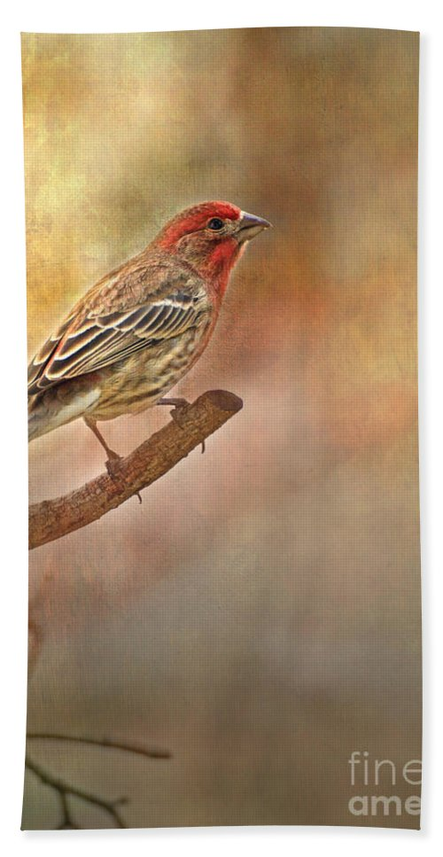 Animals Hand Towel featuring the photograph Male Housefinch Looking Up by Debbie Portwood