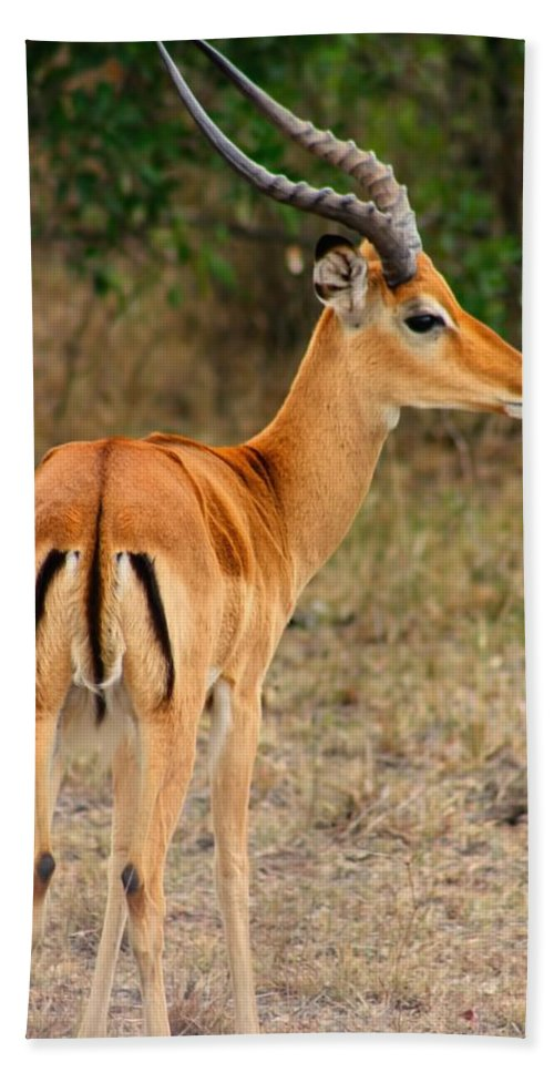 Impala Bath Sheet featuring the photograph Male Impala With Horns by Amanda Stadther