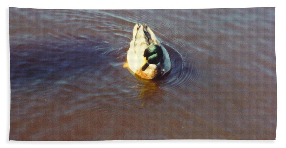 Drifting Alone Bath Sheet featuring the photograph Male Mallard Duck by Robert Floyd