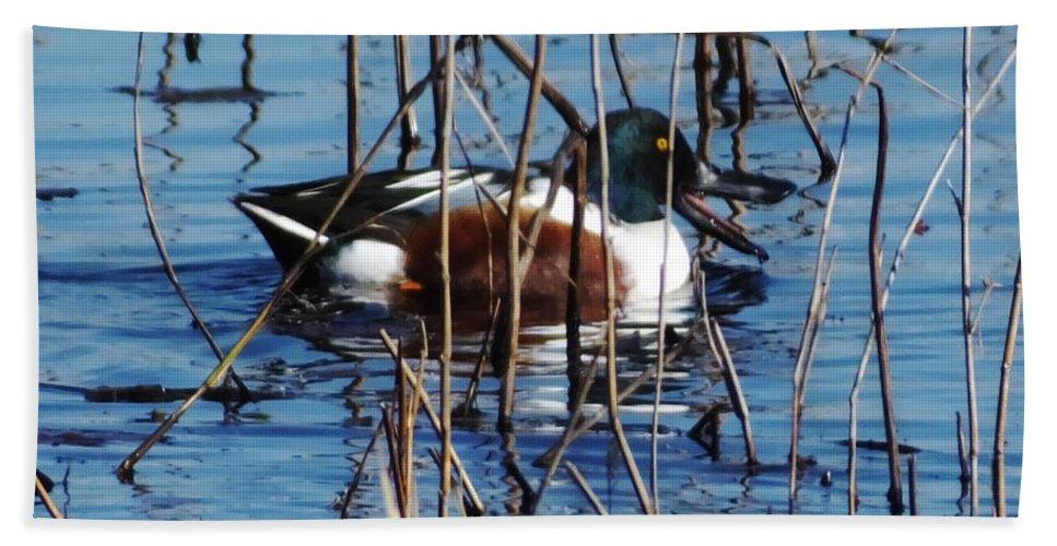 Duck Bath Sheet featuring the photograph Male Northern Shoveler Lacassine Nwr by Lizi Beard-Ward