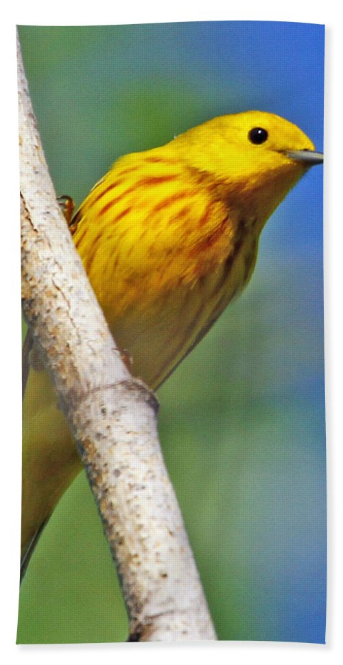 Yellow Hand Towel featuring the photograph Male Yellow Warbler by Dee Carpenter