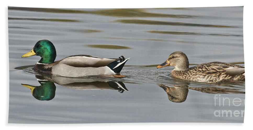 Mallard Hand Towel featuring the photograph Mallard Drake And Hen by Anthony Mercieca