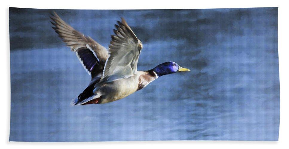 Mallard Hand Towel featuring the photograph Mallard Drake In Flight Digital Painting by Sharon Talson