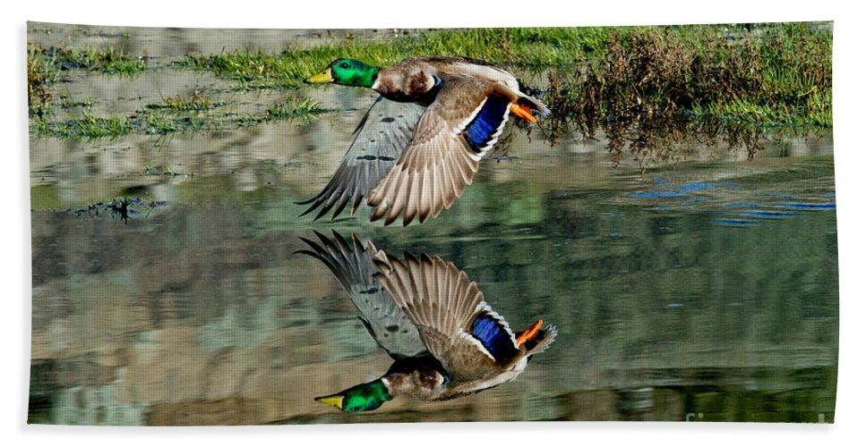 Mallard Duck Hand Towel featuring the photograph Mallard Drake Takes Off by Anthony Mercieca