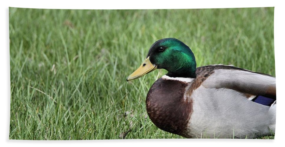 Mallard In The Grass Hand Towel featuring the photograph Mallard In The Grass by Dan Sproul